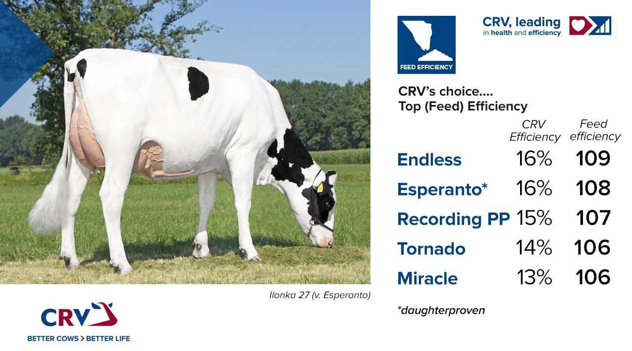 Los toros que puntúan alto en la eficiencia alimentista