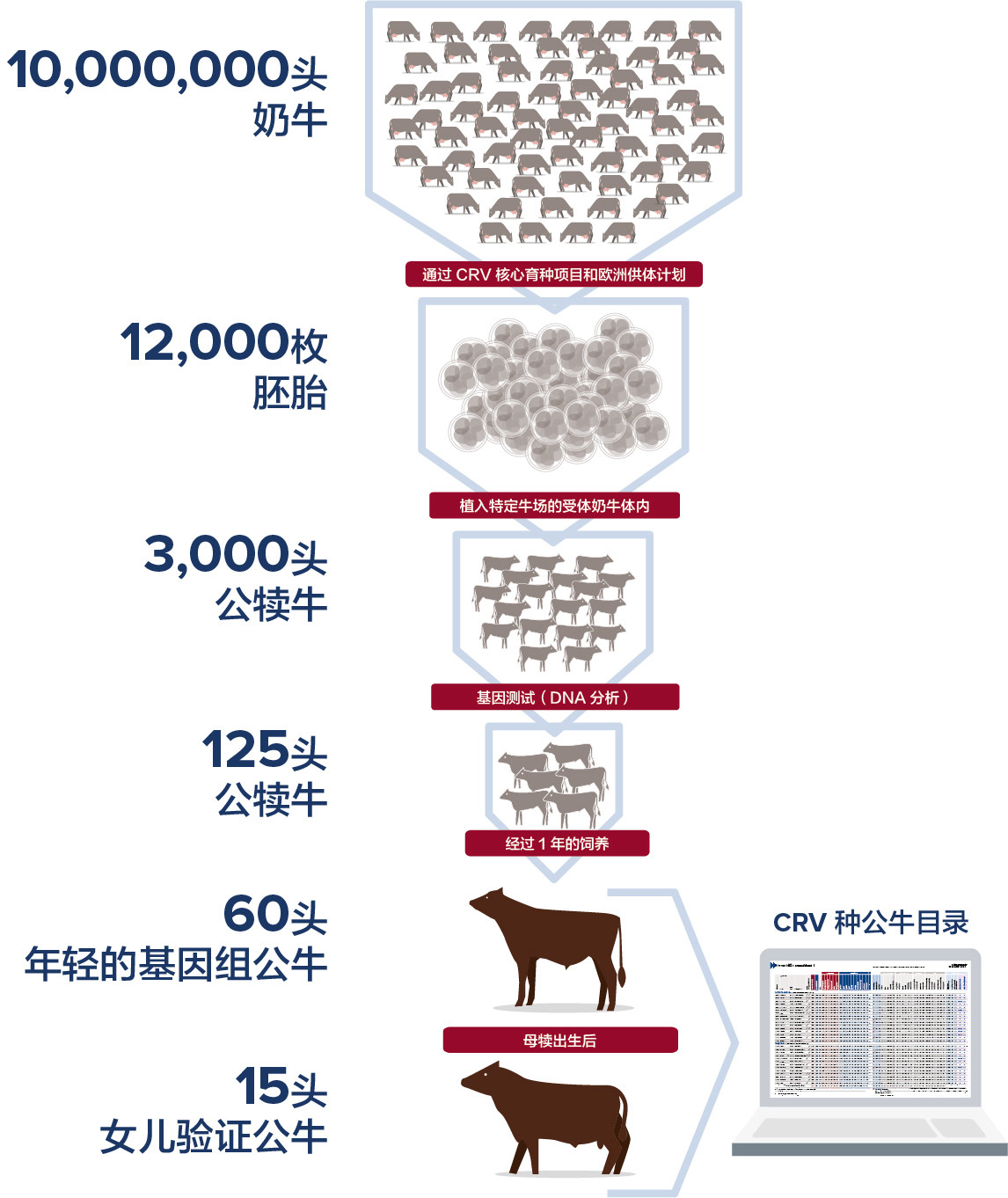 From 10 million cows to 60 InSire bulls