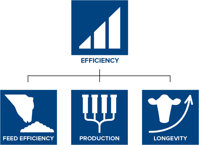 CRV Efficiency index increases feed efficiency, boosts longevity and the herd's production levels.