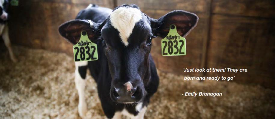 Holstein EU testimonial Mike, Emily and Corey Branagan