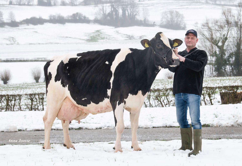 Ejemplar de la cría de Apina Nadja produce 100.000 KG de leche