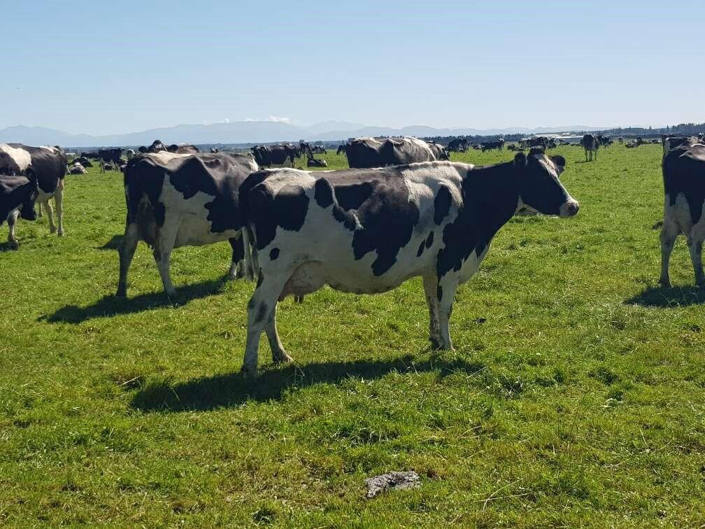 Ian Hopping's herd fertility is a top priority