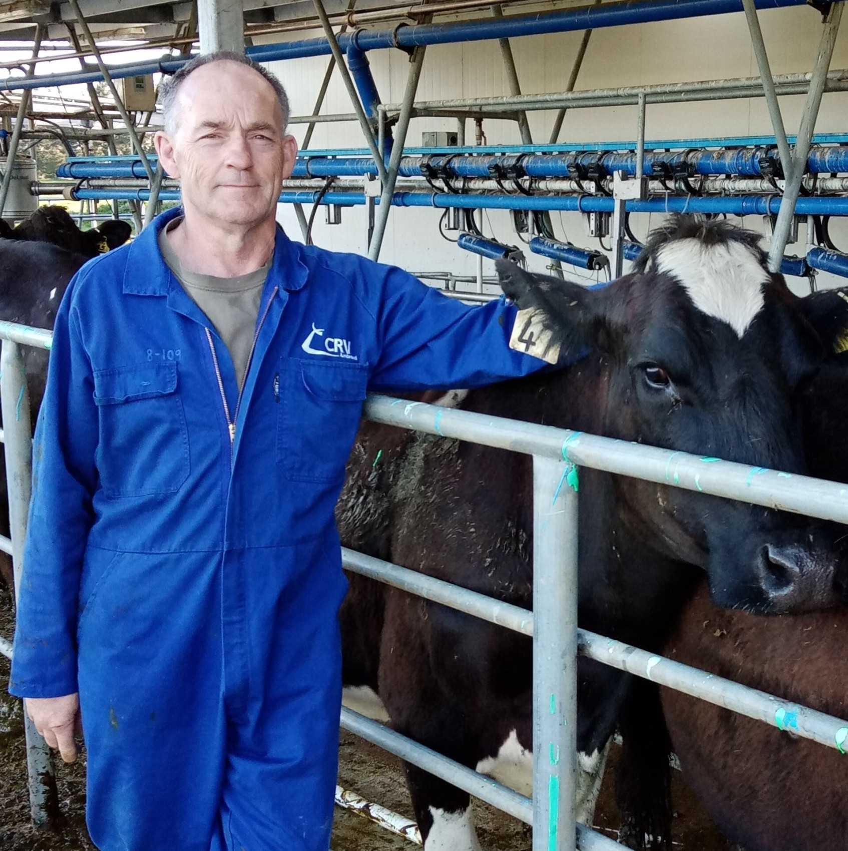 Artificial Breeding (AB) technician Dirk van den Ven