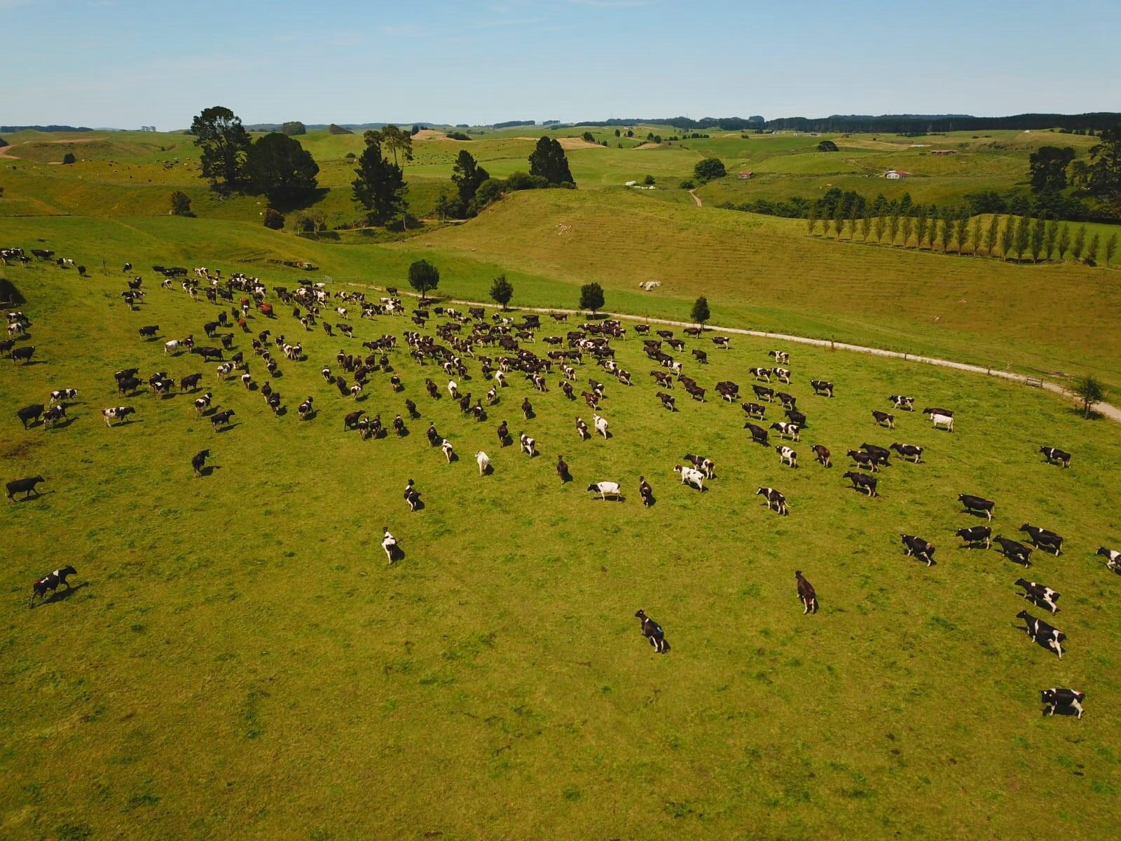 NZ dairy farms seek solutions