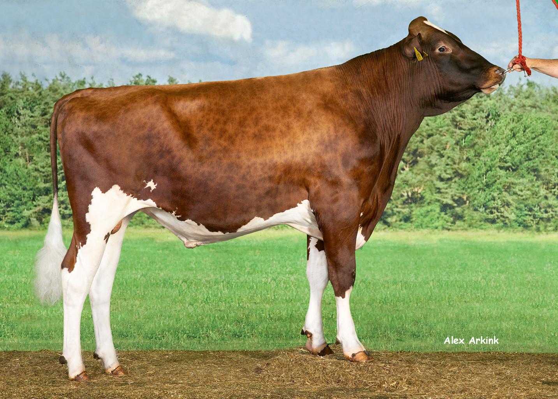 Delta Nominator is bij roodbont met +358 NVI een stier in de hoogste regionen